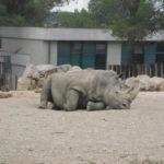 Montpellier - Les ados ont parlé anglais au zoo (21)